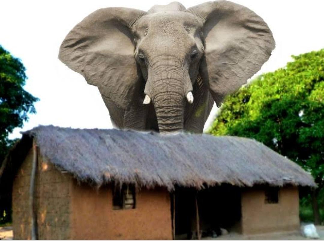 झोपड़ी में सोया हाथी और सड़क पर परिवार। यहां का है कमाल का कारनामा