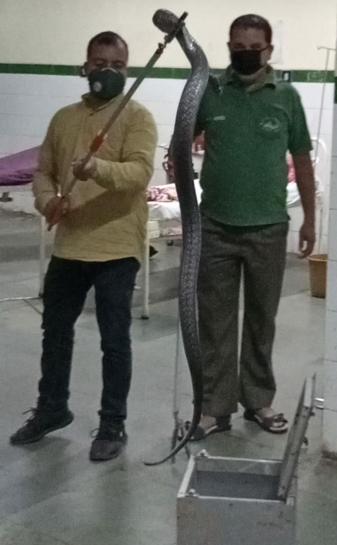कैंसर रोगियों के वार्ड में फन फैलाकर बैठा कोबरा, वन विभाग की टीम पहुंची तब तक हो चुका यह हाल