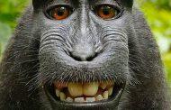 युवक का सोते वक्त मोबाइल उठा ले गया बंदर, खूब खींची सेल्फ़ी, देखिए वायरल फ़ोटो