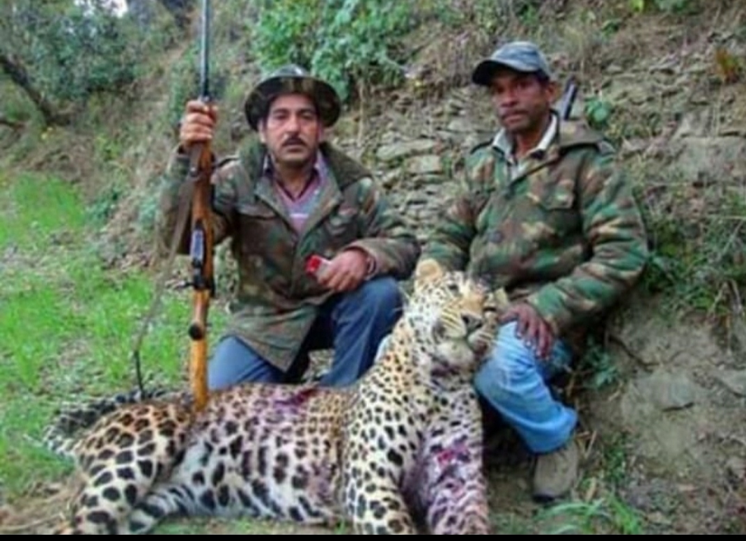 भिकियासैण में शूटर की गोली के शिकार गुलदार ने दम तोड़ा, डरे-सहमे लोगों को मिली राहत